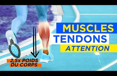 ATTENTION A VOS MUSCLES ET TENDONS