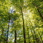 Les mini-forêts en ville, une solution pour lutter contre les canicules