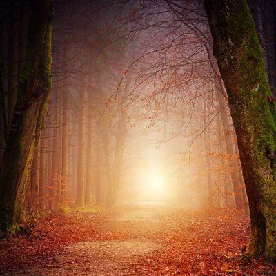 """Predigt am 19.1.2020:  Orientierung auf meinem Lebensweg: Das """"Licht der Welt"""" (Johannes 8,12)"""