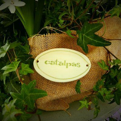 El blog de catalpas