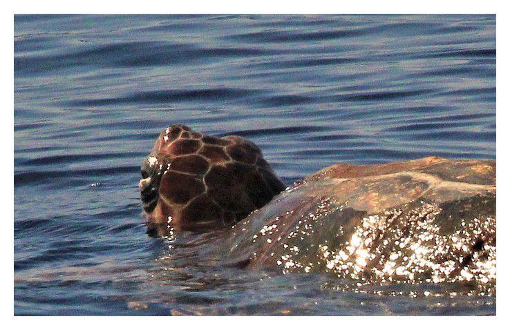 Sanary sur mer  :  à  la rencontre des dauphins