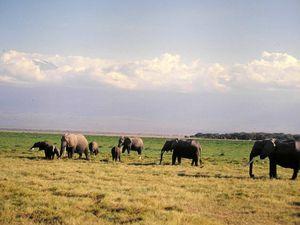 Kénia-Réserve d'Amboseli