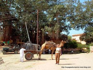 SAMODE (Rajasthan)