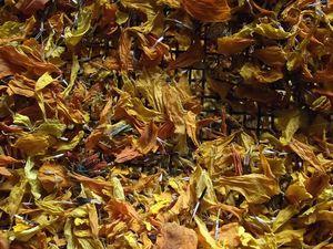 Séchage des plantes (ici, oeillet d'Inde)