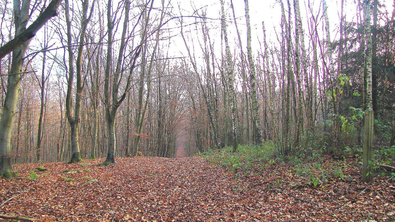 carrefour_Laie de la Fontaine de Cabaret_Sentier (parcelle 120)