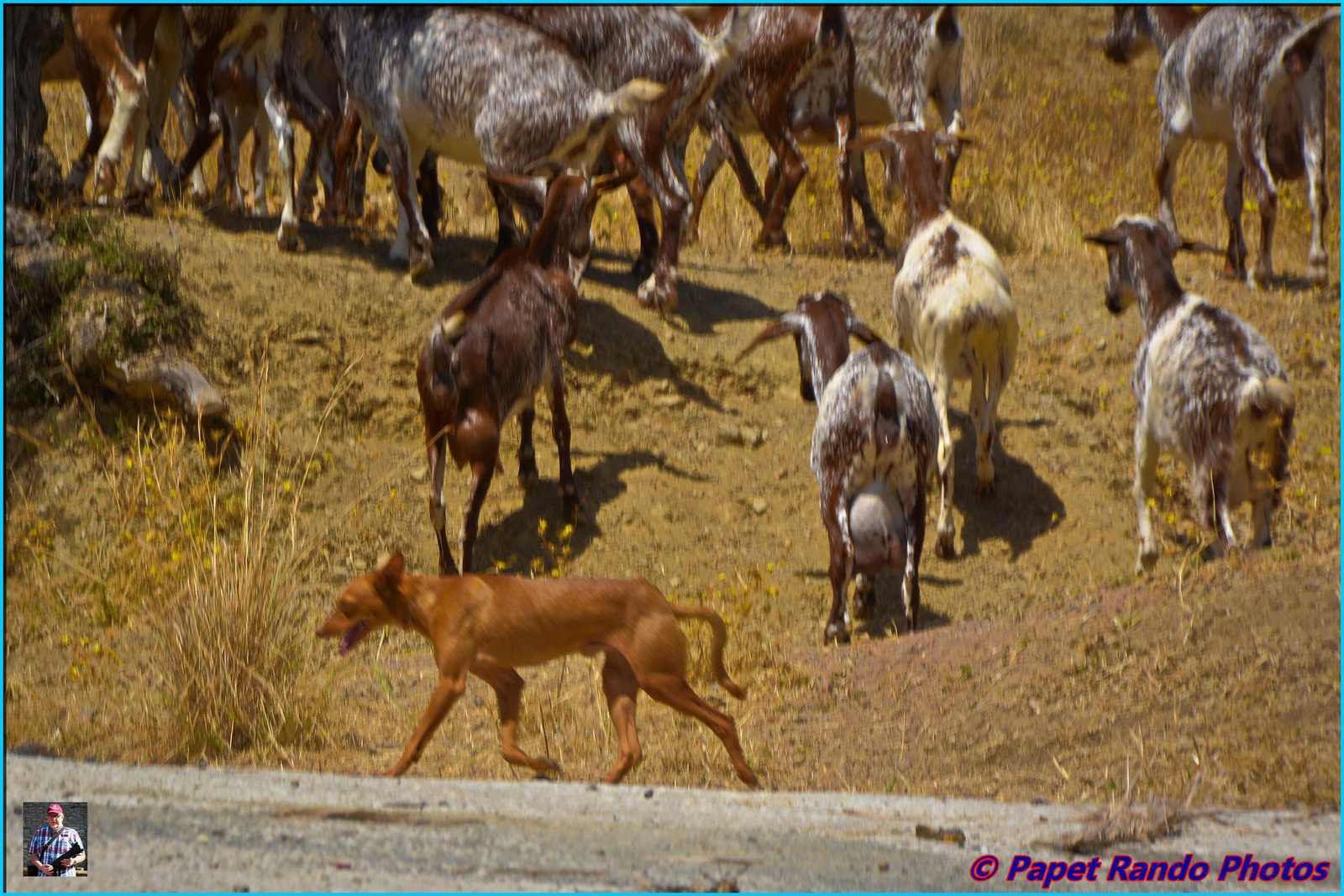 Lors de ma venue sur la Vuelta en 2017 , j'ai passé quelques jours merveilleurs  en pleine montagne,en pleine nature, a des km de la civilisation,  juste les chèvres comme voisins , encore merci a Miguel & Marie de n'avoir recu