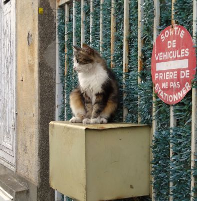 Le chat attend une lettre
