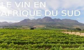 Vineyard in South Africa