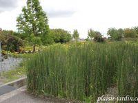 Visite des jardins du Colysée