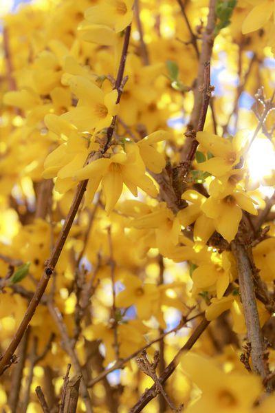 Happiness and Spring {un doux week end sur le basin d'Arcachon}