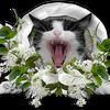 chat façon Métro Goldwyn Mayer