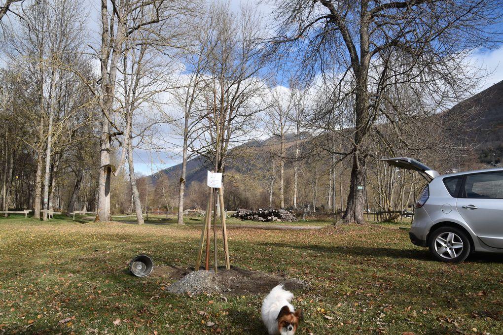 En septembre dernier nous avons fêté les anniversaires de la section et du gîte. A cette occasion la Fédération nationale des Amis de la Nature nous a offert un arbre. Ce tilleul que Jean-Louis vient juste de planter côté nord,  protégera bientôt les campeurs du soleil.