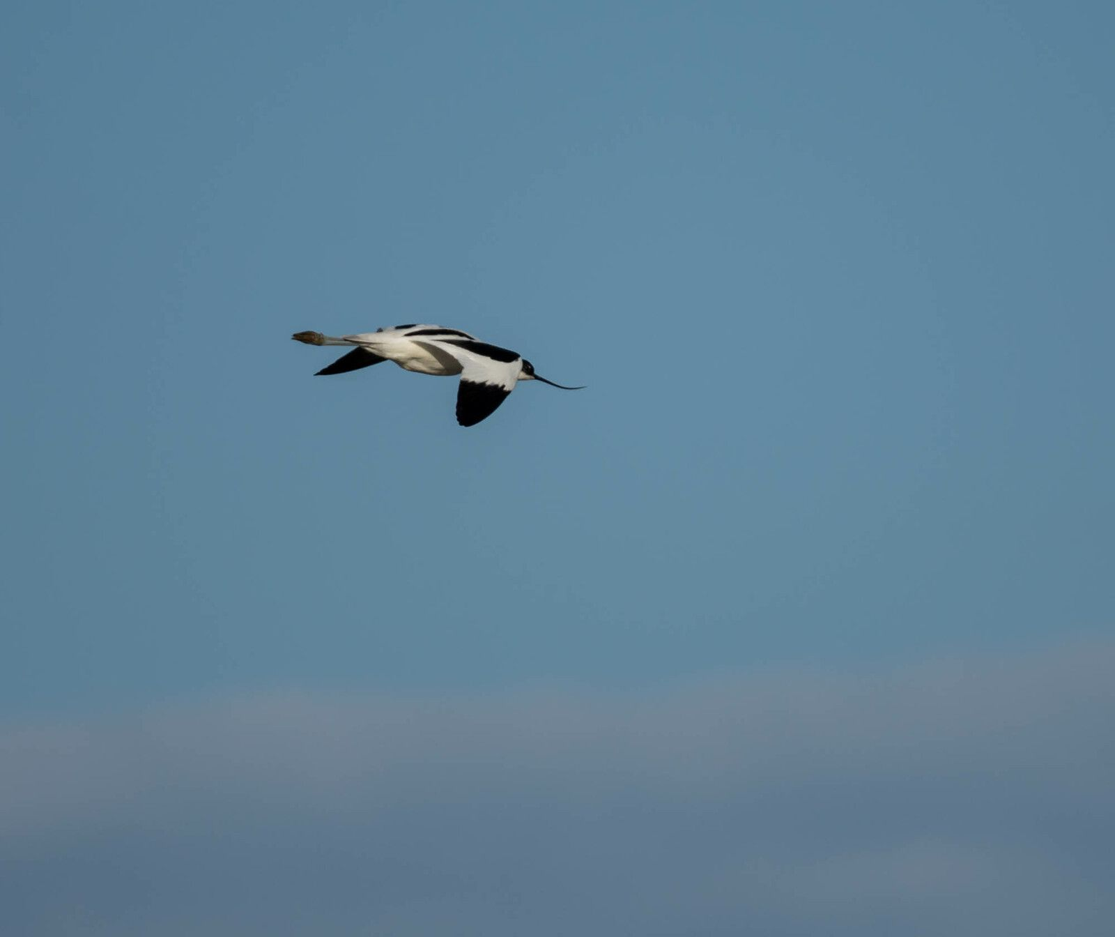 Séjour photo Oiseaux en Camargue
