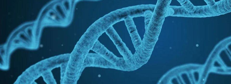 Vaccins : Une étude révèle que les cellules humaines peuvent finalement convertir l'ARN en ADN