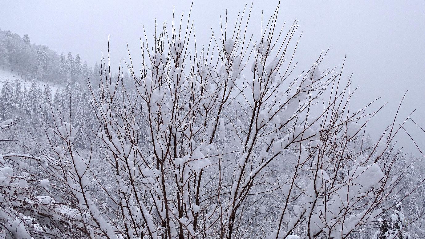 Arbres enneigés près de Belfahy - 6 photos