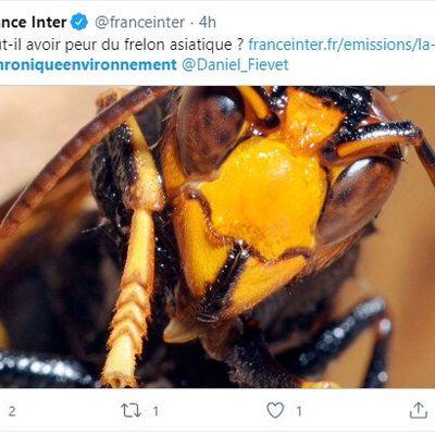 Une histoire d'insectes. Les Cafards font la chasse aux frelons hi hi ! c'est ici :