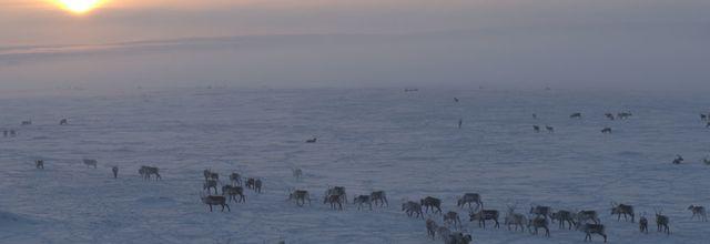 National Geographic Wild va nous faire découvrir dès le 14 septembre la Scandinavie