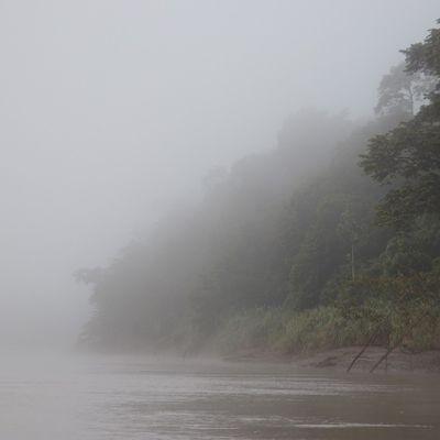 Borneo - Orang Utans und Haie und Krokodile und schräge Party