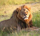 Braconnage du lion Cecil