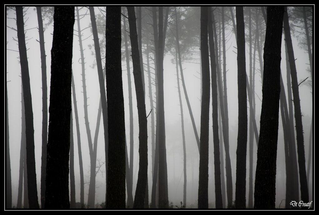 Album - Paysages-V3.0
