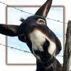 Sourire du samedi (la BDJ): Comment gagner de l'argent avec un âne!