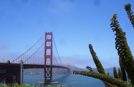 San Francisco, le Golden Gate bridge