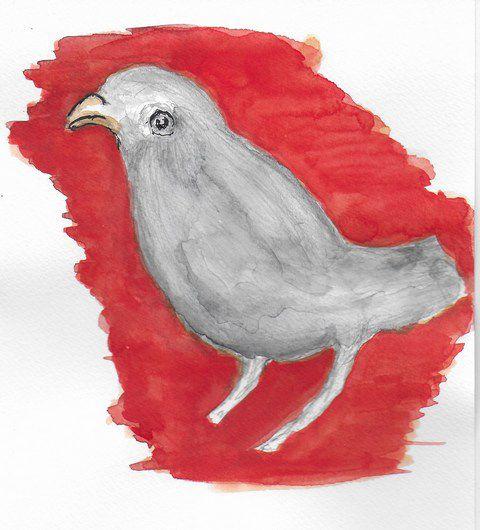 Un oiseau d'un palais de Cherchell