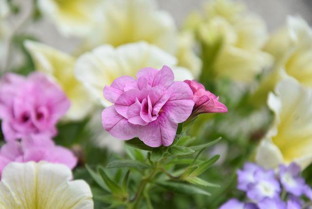 la suite de ma brassée de fleurs pour vous