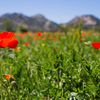 Séjour en Provence...