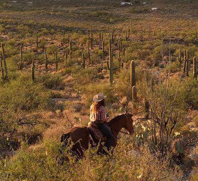 Vacances sur un ranch: un autre genre de «tout inclus»