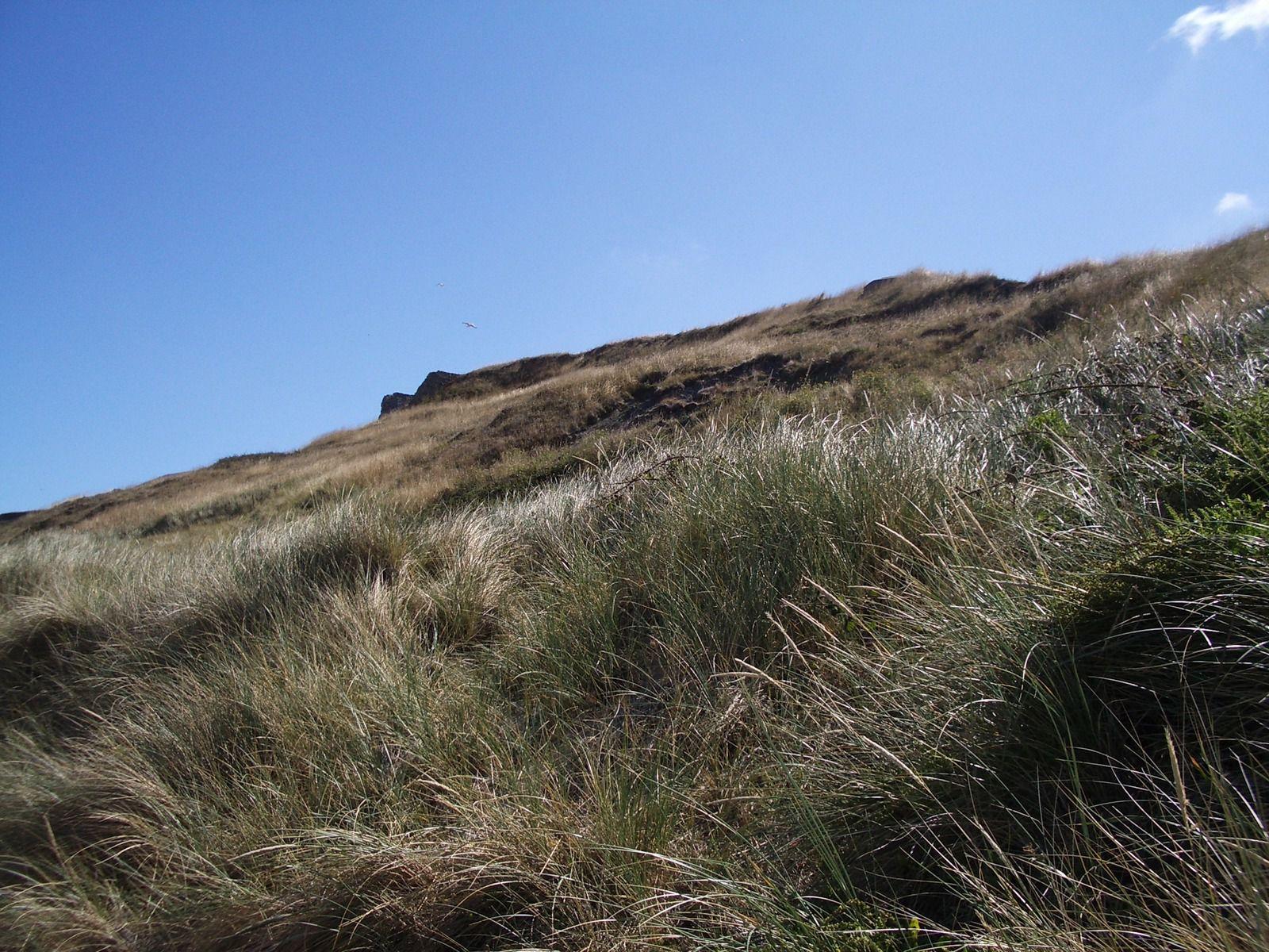 dune à Le Portel