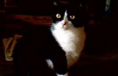 Félix au paradis des chats