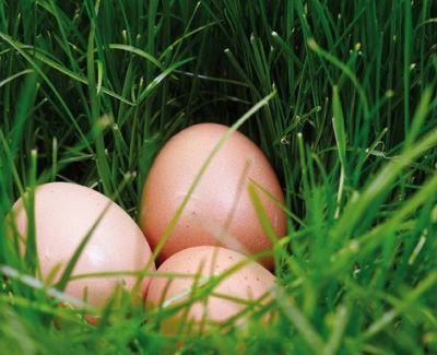 La nécessité d'utiliser des œufs Bio ou label Rouge et le pain de viande à l'américaine …