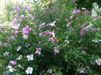 Le pouvoir des fleurs réinterprété...
