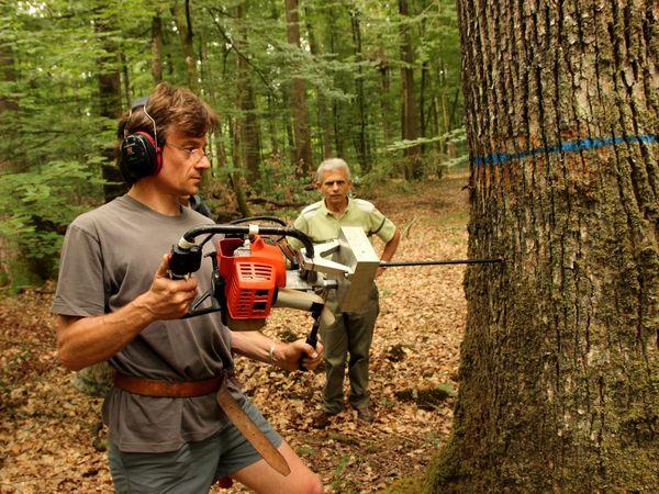 Stéphane Ponton, chercheur unité écologie et écophysiologie forestière de l'INRA de Nancy et Joël Guitton, responsable sylviculture ONF et chargé de travaux, auscultent les premiers prélèvements