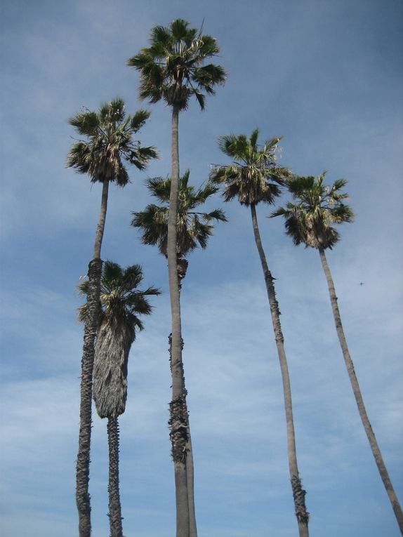 Album - PLAGES-SANTA-MONICA---LOS-ANGELES
