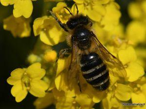 Fleurs et insectes d'avril