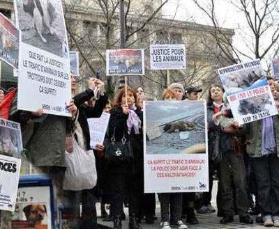 Trafics d'animaux : premiers échos de la manif du 27 mars