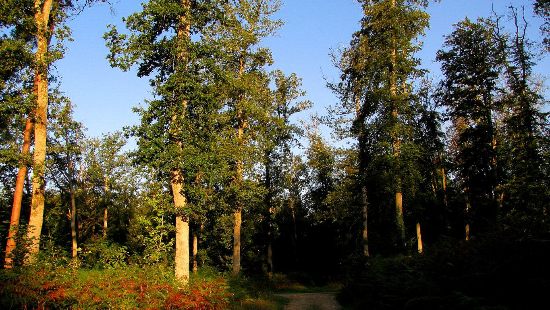 Randonnée en forêt de Compiègne_la Route Tournante sous le Mont Saint-Mard