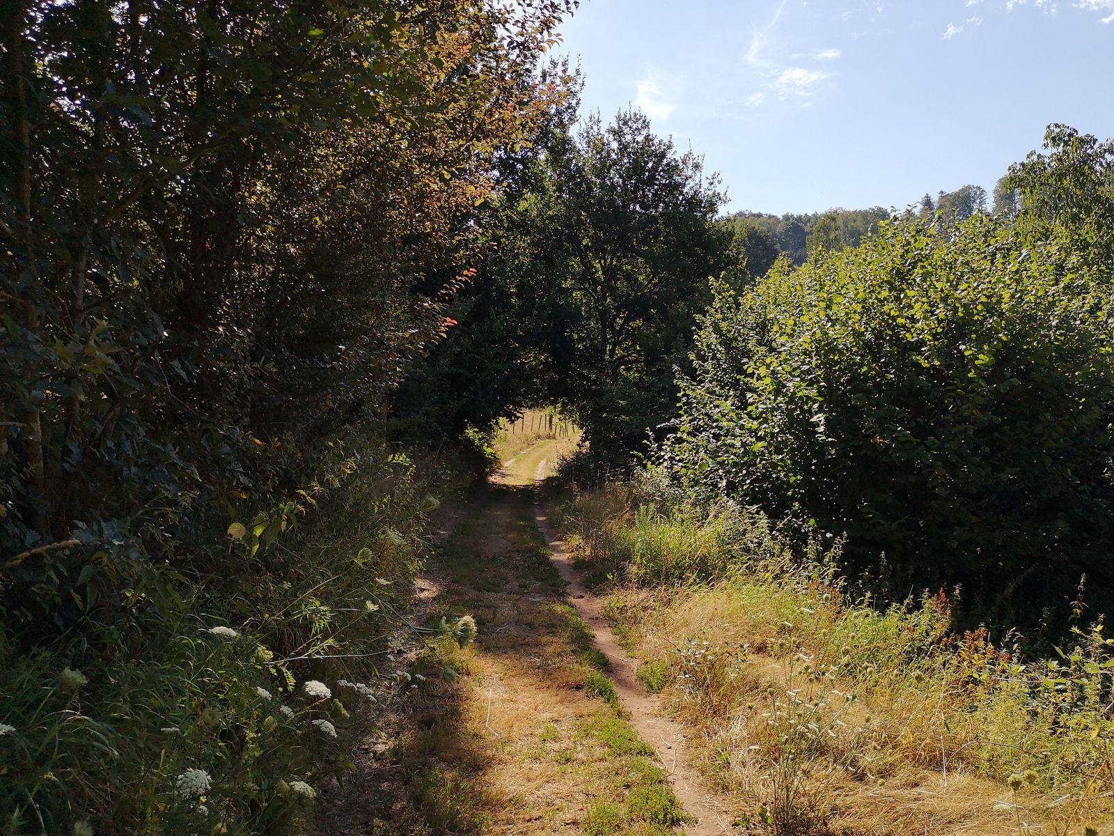 """En quittant Haselbourg, j'emprunte le fort sympathique """"Chemin de Faucons"""""""