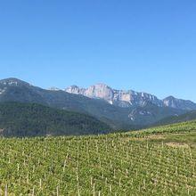 Les vignes d'Aurel, en Diois.
