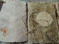 Ecritures et végétal