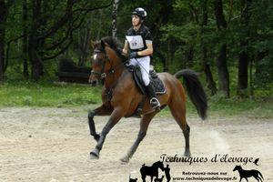 Méthodes pour limiter les pics de glycémie chez le cheval