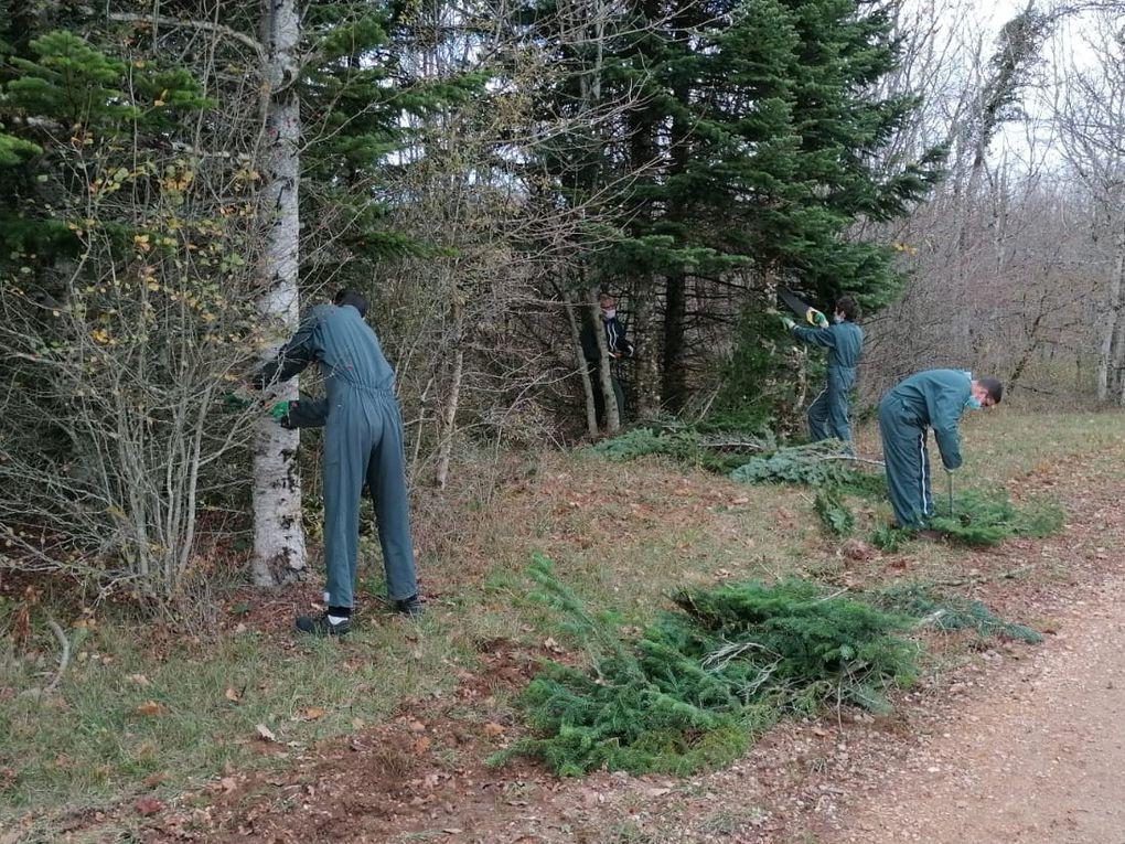 Les garçons en pleine activité : le travail consiste à élaguer toutes les branches basses jusqu'à 3m de hauteur.