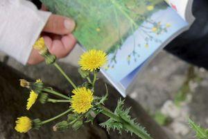 Au jardin ou en balade, contribuer aux sciences participatives