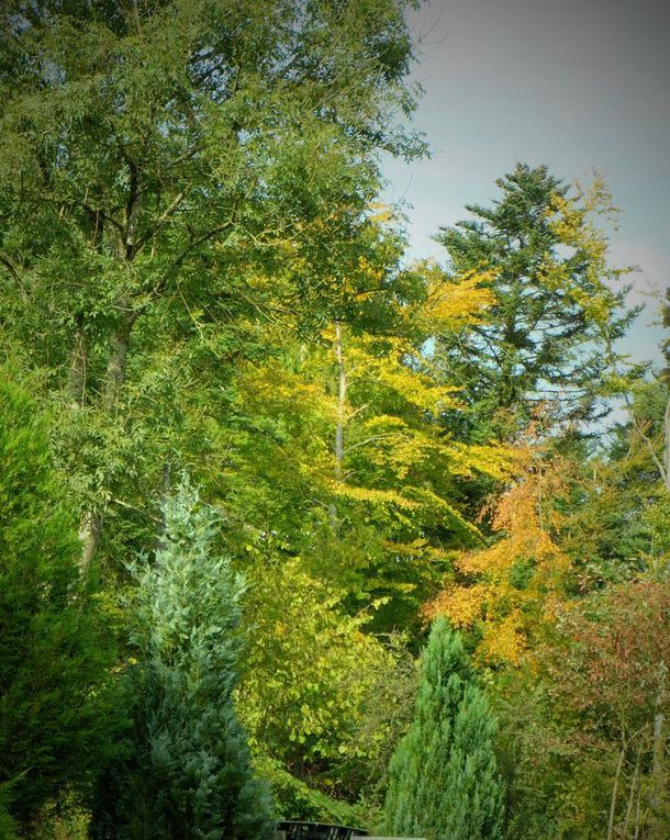 Ors d'automne