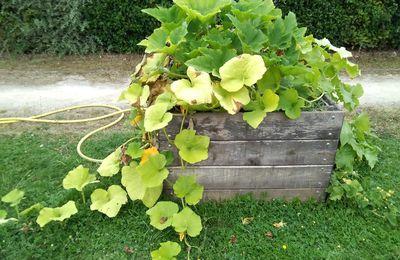Jardin et  première récolte au PASA