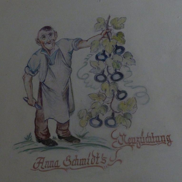 Toll angekommen beim Weinfest: Gelungene Premiere der Schlenderweinprobe mit Dr. Martina Edelmann mit viel Historie über den Weinbau in Veitshöchheim