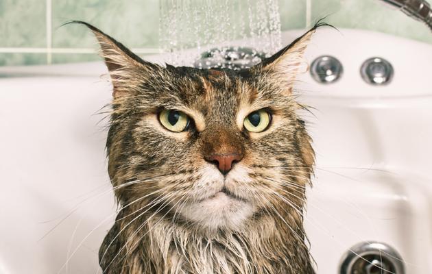 Comment se laver correctement les oreilles?