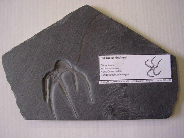 <p> Album de la faune fossile d'Allemagne </p> <p> Cet album contient les fossiles originaires d'Allemagne, hormis ceux de l'Eifel. </p> <p> Toutes ces pièces appartiennent à notre collection privée. </p> <p> Phil « Fossil » </p